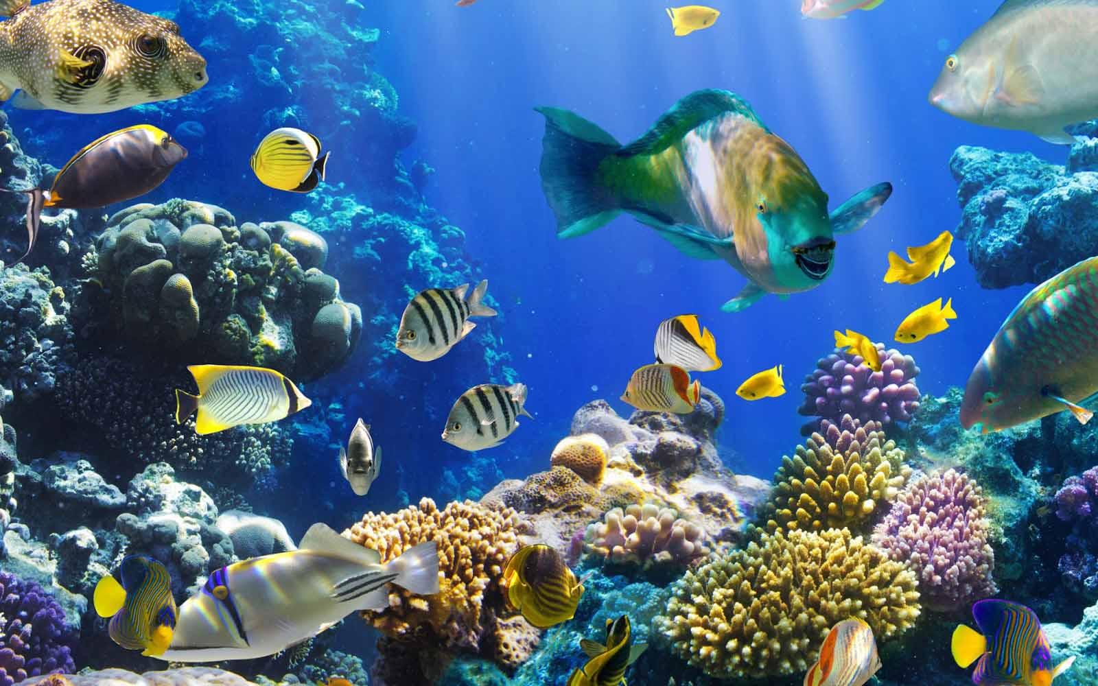 Los peces tienen memoria