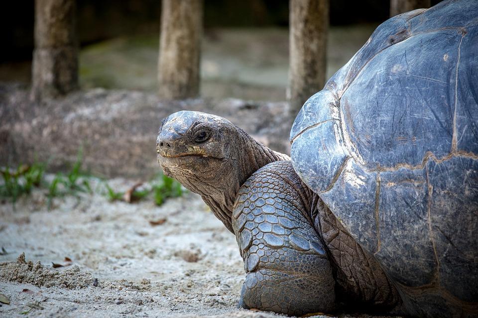 animal más longevo