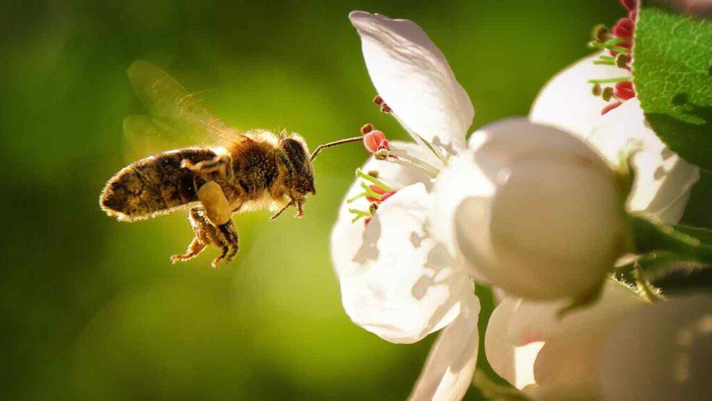 terapia con abejas